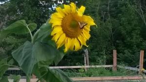 https://umdearborn.edu/eic/research/garden.html